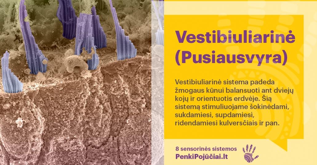 Vestibiuliarinė (pusiausvyra)