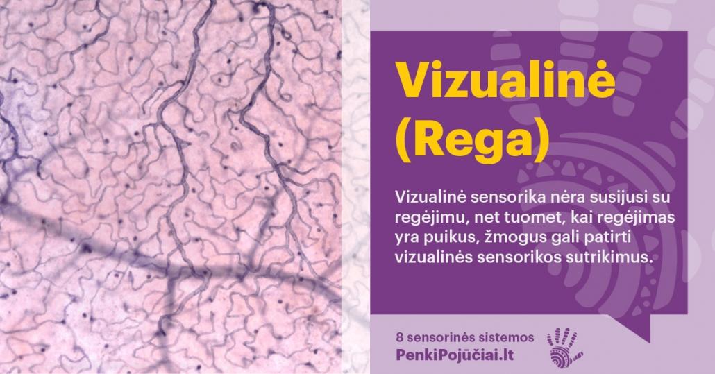 Vizualinė (rega) sensorinė sistema